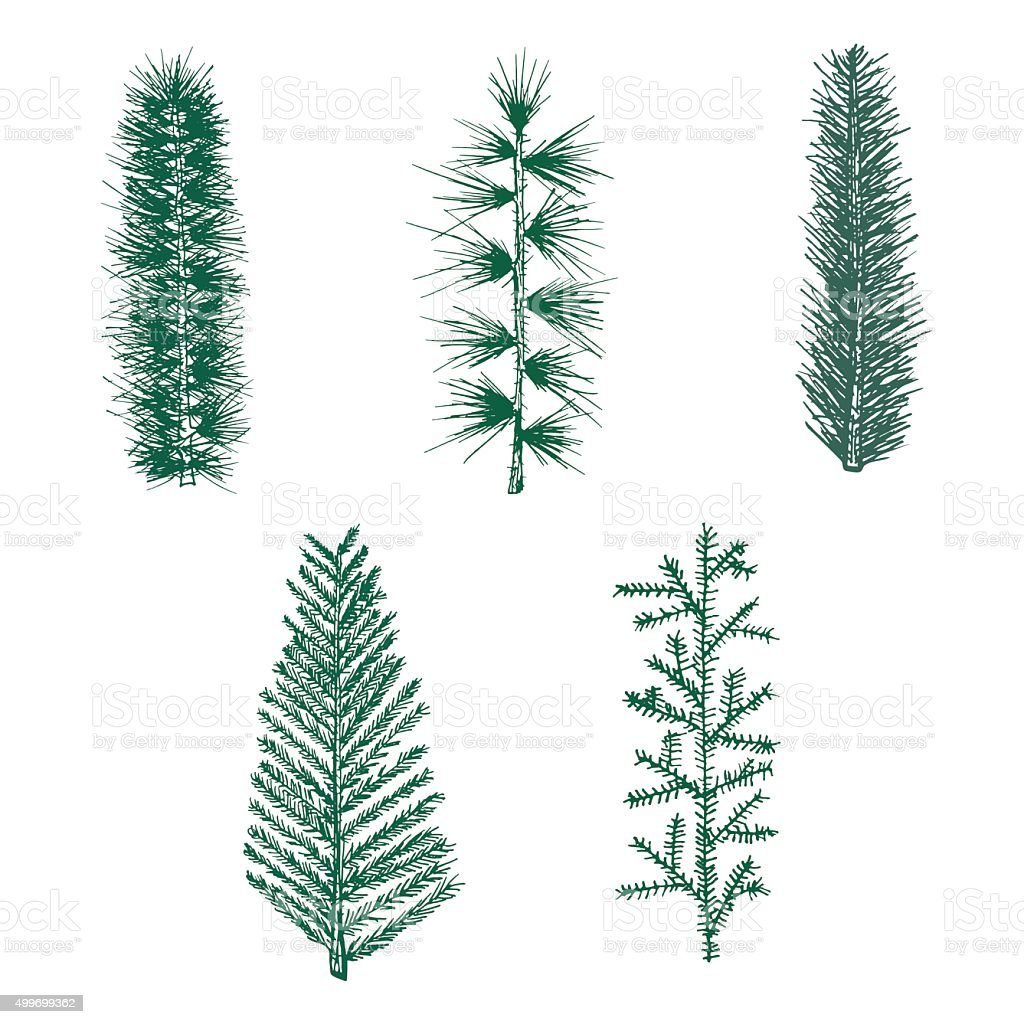 Hand drawn set green fir branch pine vector isolated vector art illustration