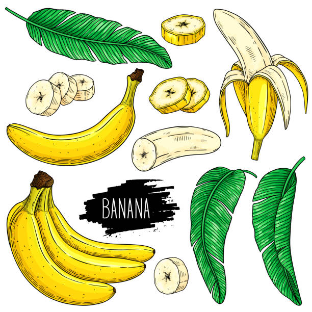Hand drawn set of banana, slices pieces, bunch and leaves Hand drawn set of banana, slices pieces, bunch and leaves isolated on white background with label. Design for shop, market, book, menu, poster, banner. Vector sketch illustration banana stock illustrations