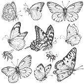 Hand drawn set of butterflies and bees.