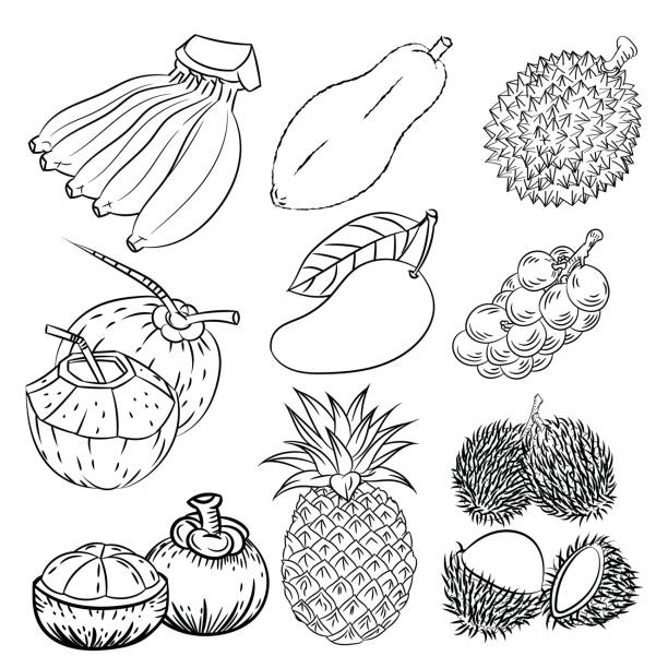 hand drawn set of different tropical fruits vector sketch design vector art illustration