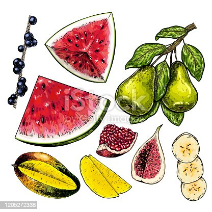 Hand drawn set of fuits. Vector colored isolated objects. Fig, mango, pomegranate, pear branch, acai, banana slices, watermelon, blueberry. For restaurant menu food package poster design