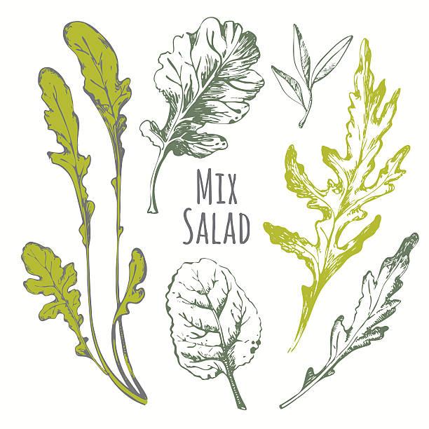 hand drawn set von mix-salat. skizze kräutern. - kräutermischung stock-grafiken, -clipart, -cartoons und -symbole