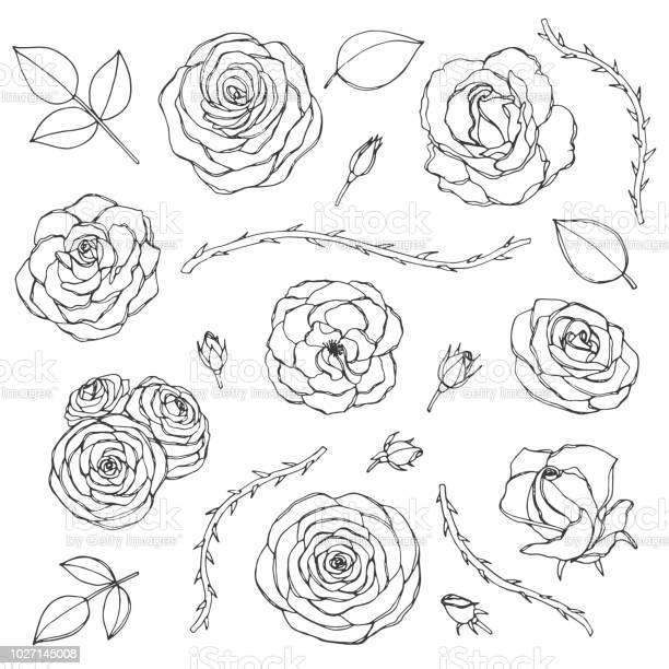 Hand drawn set of rose flowers with buds leaves and thorny stems line vector id1027145008?b=1&k=6&m=1027145008&s=612x612&h=si4kj9sguyjvx kqclxolgolo98ckkj62j6vhf2v48s=