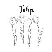 Hand drawn set of side view black and white open and closed tulip flower, sketch style vector illustration isolated on white background. hand drawing of tulip flowers, decoration element
