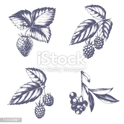 Hand drawn set of strawberry, blackberry, raspberry and blueberry with leaves. Isolated vector fruit sketch.
