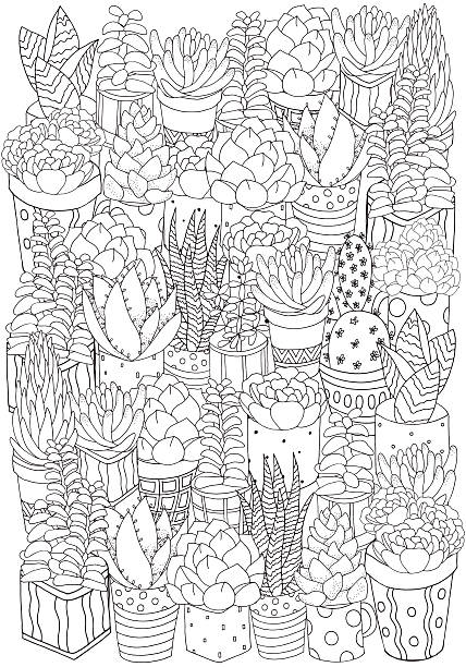 Hand drawn set of succulents, cactuses and pots. Hand drawn set of succulents, cactuses and pots.  Doodles elements. Black and white. Coloring book page for adult. Summer, succulent, doodles, vector, art design elements. Linear botanical vector. só adultos stock illustrations