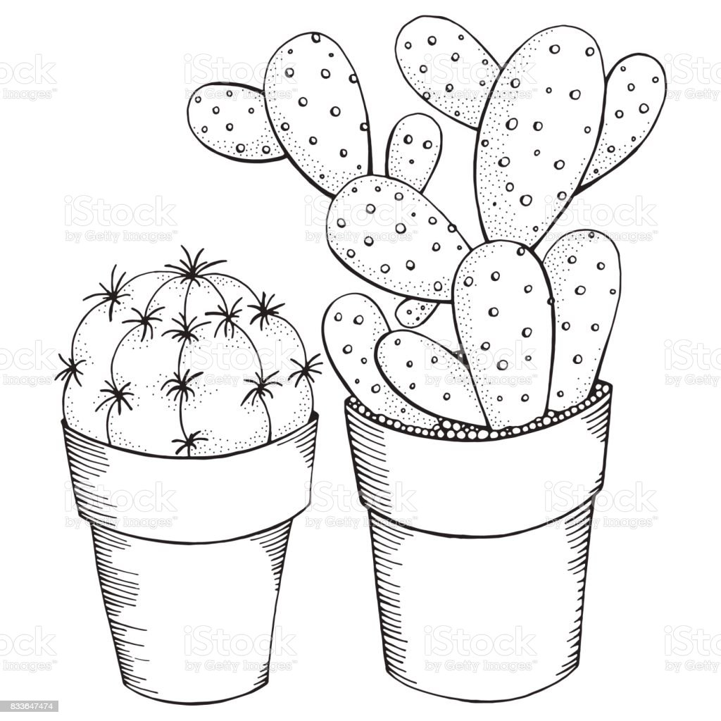 Hand Drawn Set Of Succulents Or Cactus In Pots Doodles Black And White