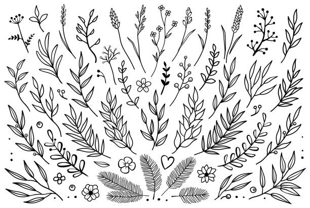 hand drawn set of tree branches - vine stock illustrations, clip art, cartoons, & icons
