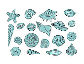 Hand drawn set of various seashell and starfish. Vector art illustration.
