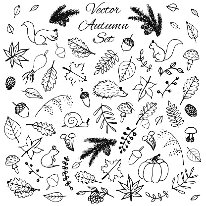 Hand drawn set of vector autumn elements: animals and leaves.