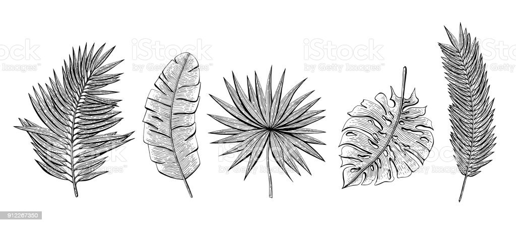 Hand drawn set with tropical leaves chamaerops, banana palm, chamaedoria, monstera, areca palm. Design elements for invitations, greeting cards, wrapping paper, cosmetics packaging, labels, flyer. vector art illustration