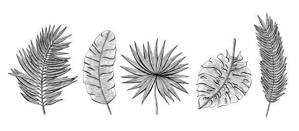 Handgezeichneten Satz mit tropischen lässt Banane Palm, Chamaedoria, Monstera, Chamaerops, Areca Palme. Design-Elemente für Kosmetik-Verpackungen, Etiketten, Flyer, Einladungen, Grußkarten, Geschenkpapier. – Vektorgrafik