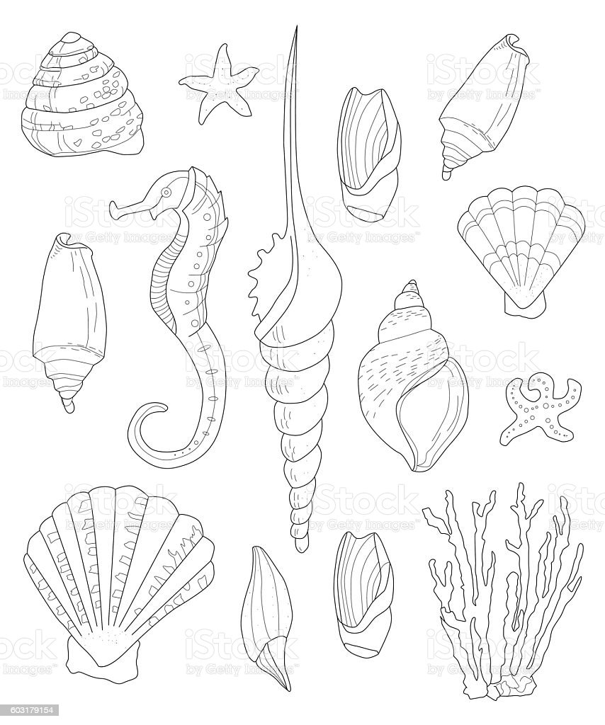 Hand drawn shells for coloring pages for adults stock for Shells coloring page