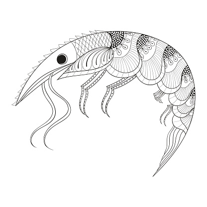 Hand drawn Shrimp for adult anti stress coloring pages