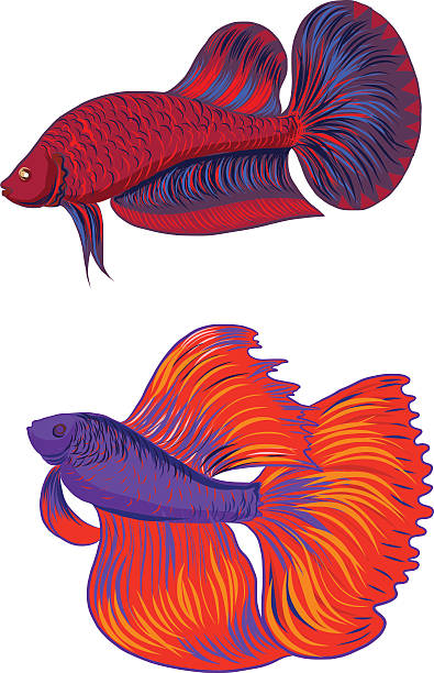 Royalty Free Siamese Fighting Fish Clip Art, Vector Images ... (395 x 612 Pixel)