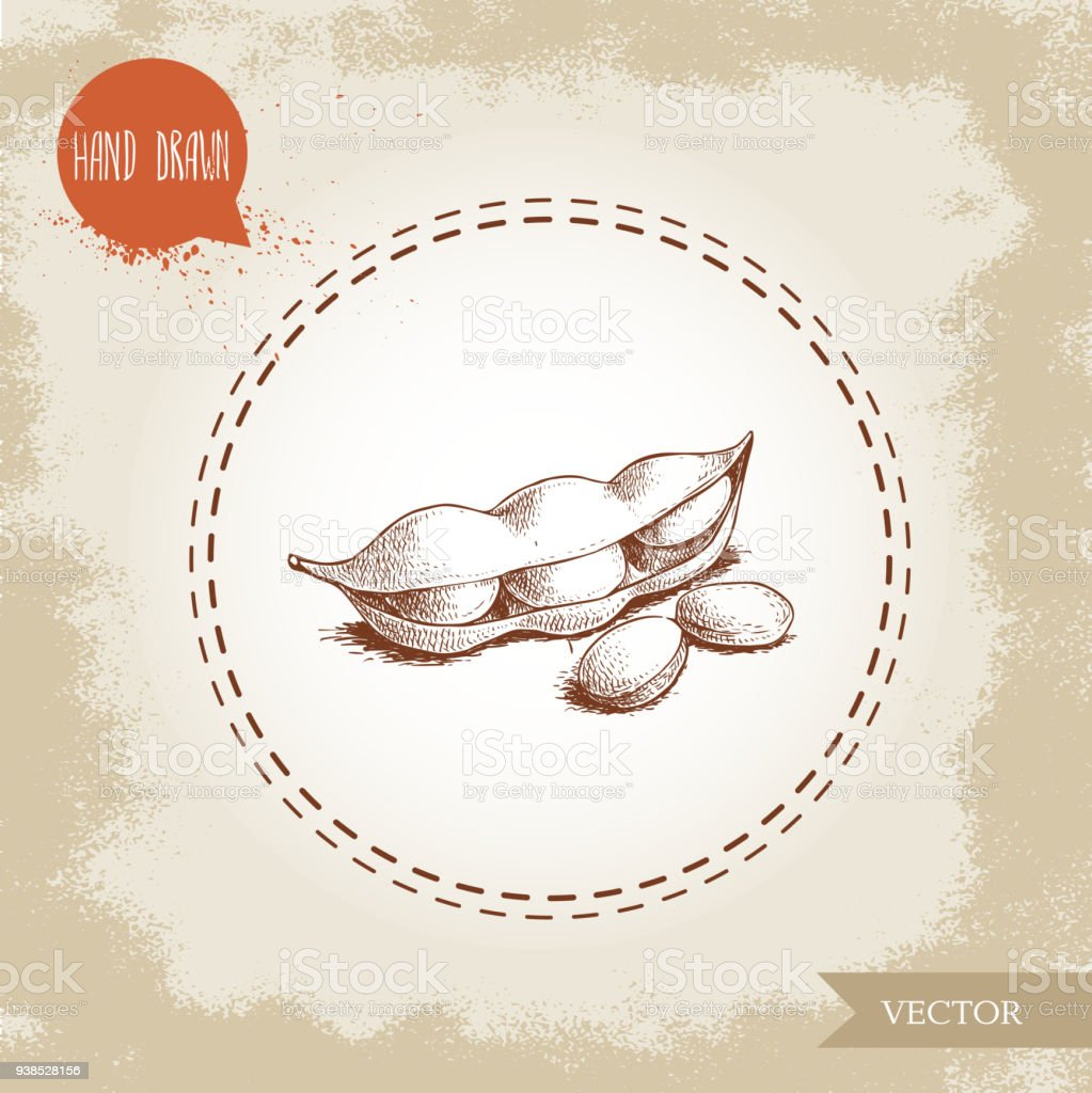 Hand drawn sketch edamame green beans. Soybeans artwork composition isolated on old background. Ethnic and japanese healthfood. Vector illustration. vector art illustration