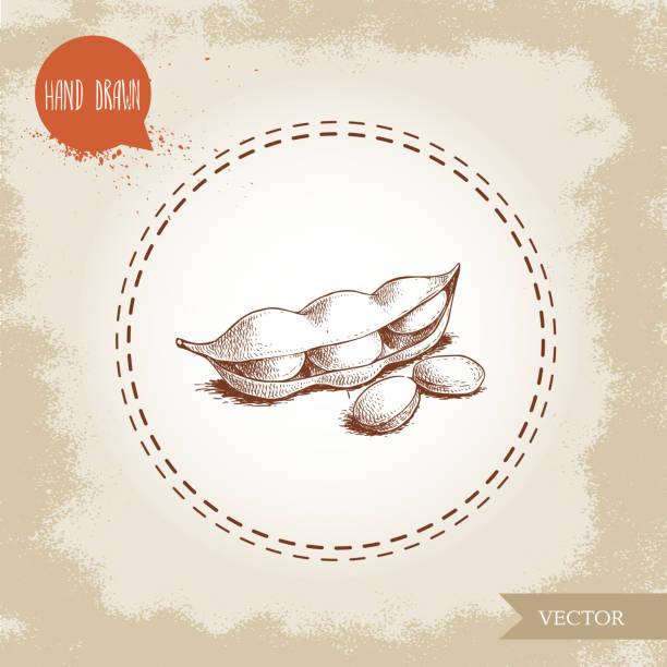 手描きスケッチ枝豆グリーン大豆のアートワークの組成物は、古い背景に分離されました。民族と日本の健康食品。ベクトルの図。 - 枝豆点のイラスト素材/クリップアート素材/マンガ素材/アイコン素材