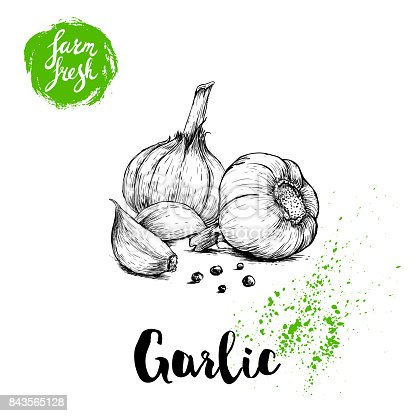 istock Hand drawn sketch garlic group with black pepper. Fresh farm food vector illustration. Farm vegetables poster. 843565128
