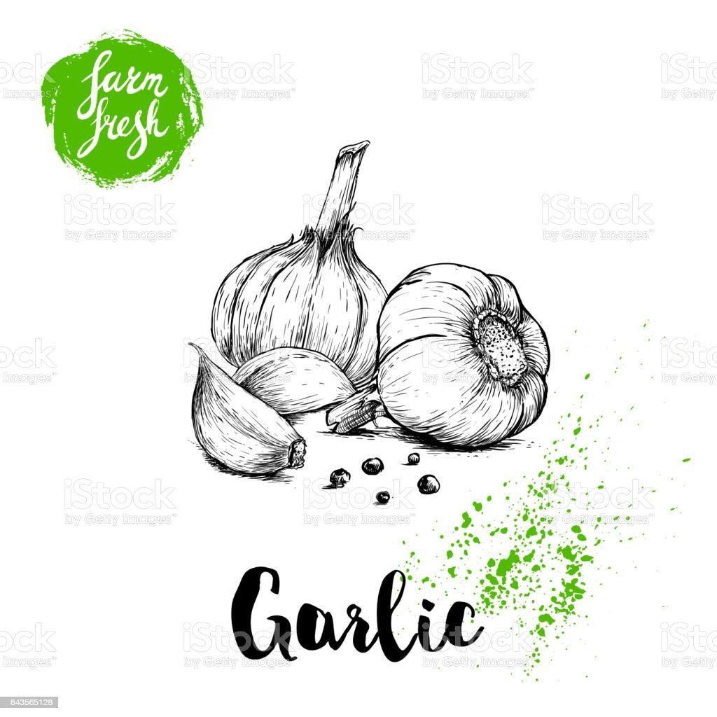 Grupo de alho mão esboço desenhado com pimenta preta. Ilustração em vetor alimentos frescos da fazenda. Cartaz de legumes de fazenda. - ilustração de arte em vetor