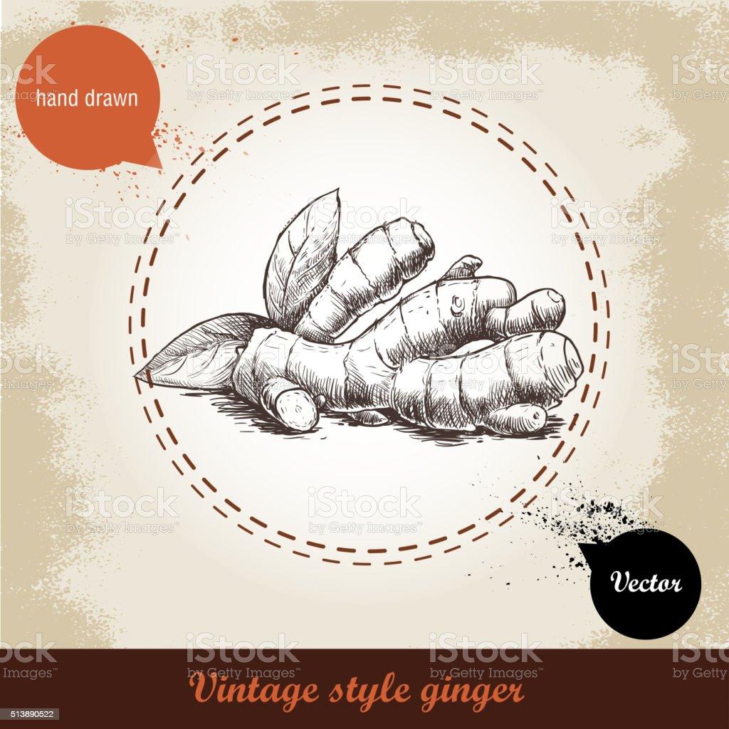 Hand drawn sketch ginger root vector art illustration