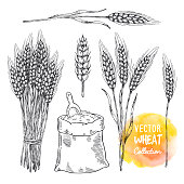 Hand drawn sketch illustration of wheat. Agriculture theme concept, cereal products, bakery pattern, healthy food.