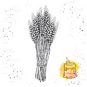 Hand drawn sketch illustration of wheat. Vector wheat elements for label, packaging.