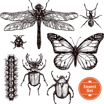 hand drawn sketch insect set