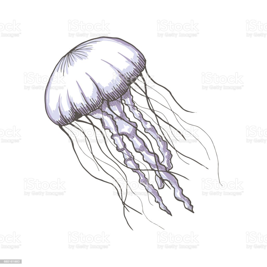 hand drawn sketch isolated jellyfish marine animals royalty free stock vector art