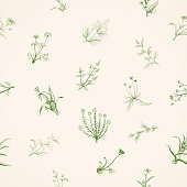 Hand drawn sketch medicinal plants.