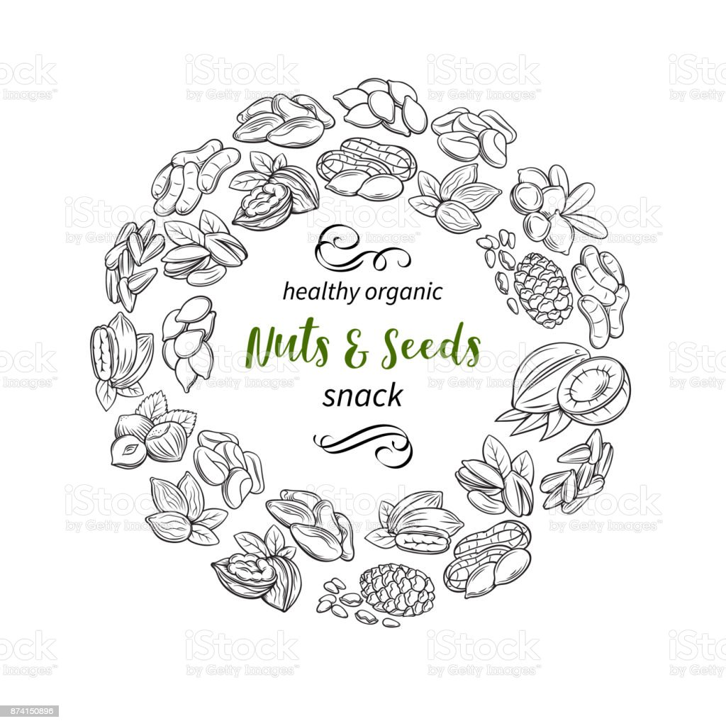 hand drawn sketch nuts and seeds vector art illustration