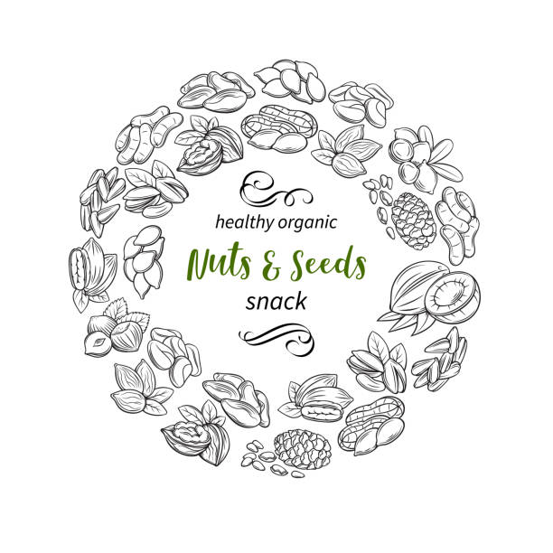 hand drawn sketch nuts and seeds - nuts stock illustrations