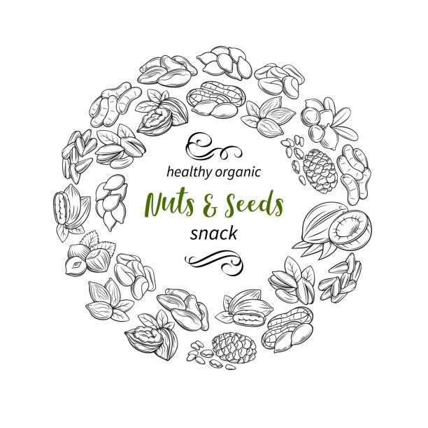 손으로 그린 스케치 견과류와 씨앗 - nuts stock illustrations