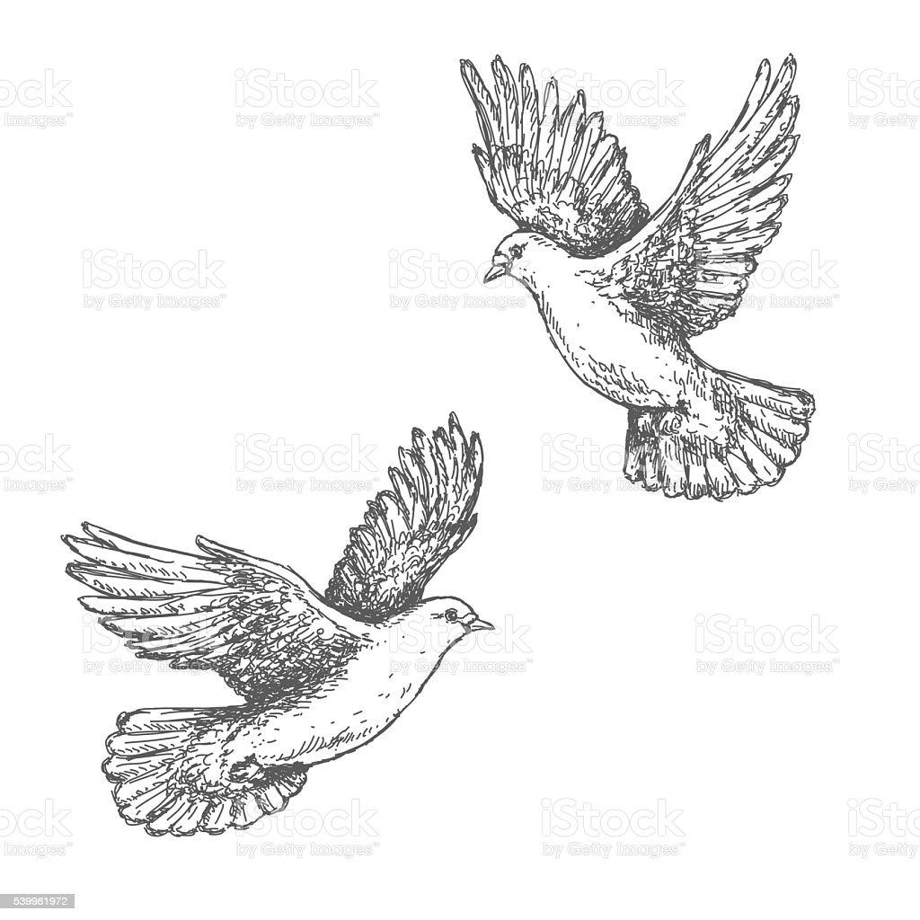 Hand Drawn Sketch of Flying Doves vector art illustration