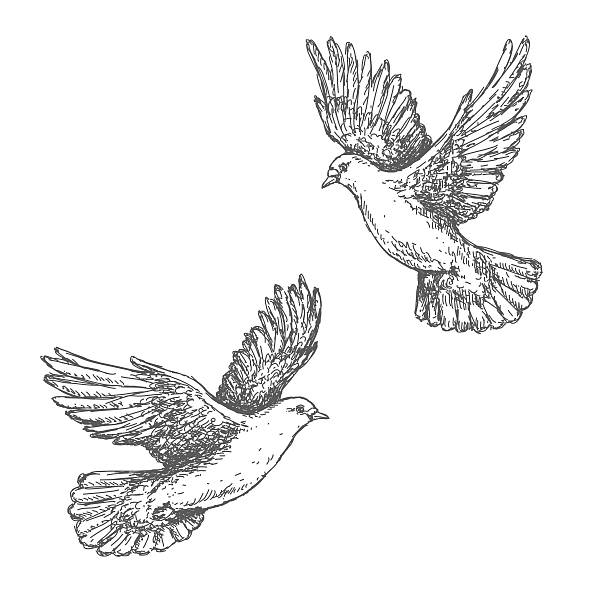 Hand Drawn Sketch of Flying Doves Hand drawn pair of flying doves isolated on white background. Black and white image. Two pigeons vector sketch. pigeon stock illustrations