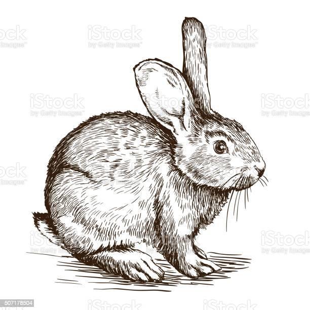 Hand drawn sketch of rabbit vector id507178504?b=1&k=6&m=507178504&s=612x612&h=ybay7rtty0pttsm8j8 qoj476enmwsfu90oknyeh51k=