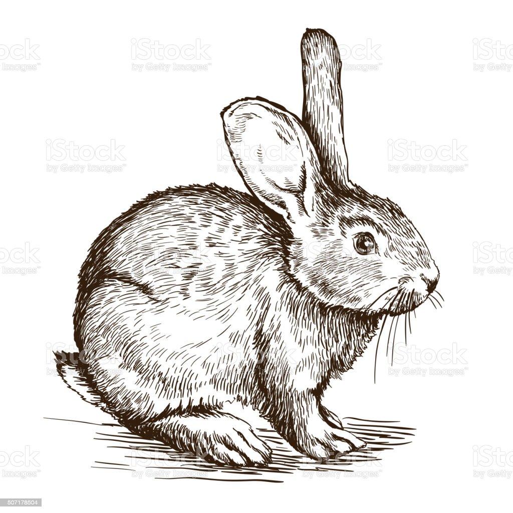 hand drawn sketch of  rabbit vector art illustration