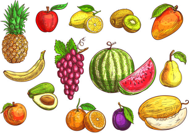 Hand drawn sketch of tropical and exotic fruits. Fruits set. Sketch hand drawn illustration of isolated vector tropical and exotic fruits. Color drawings of pineapple, banana, apple, avocado, peach, red grape, lemon, orange, watermelon, kiwi, plum, mango pear melon avocado silhouettes stock illustrations