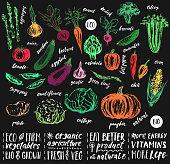 Hand drawn sketch of vegetables with hand lettering names. Organic farm product design. Artichoke, asparagus, potato, tomato, pepper, cucumber, corn, onion, chili, beetroot, carrot, cauliflower, pumpkin, zuccini, sugar pees, eggplant, garlic, broccoli, green beans, radish, cabbage.