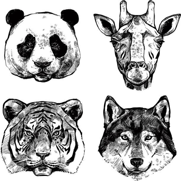 illustrations, cliparts, dessins animés et icônes de animaux dessinés à la main portrait croquis - panda