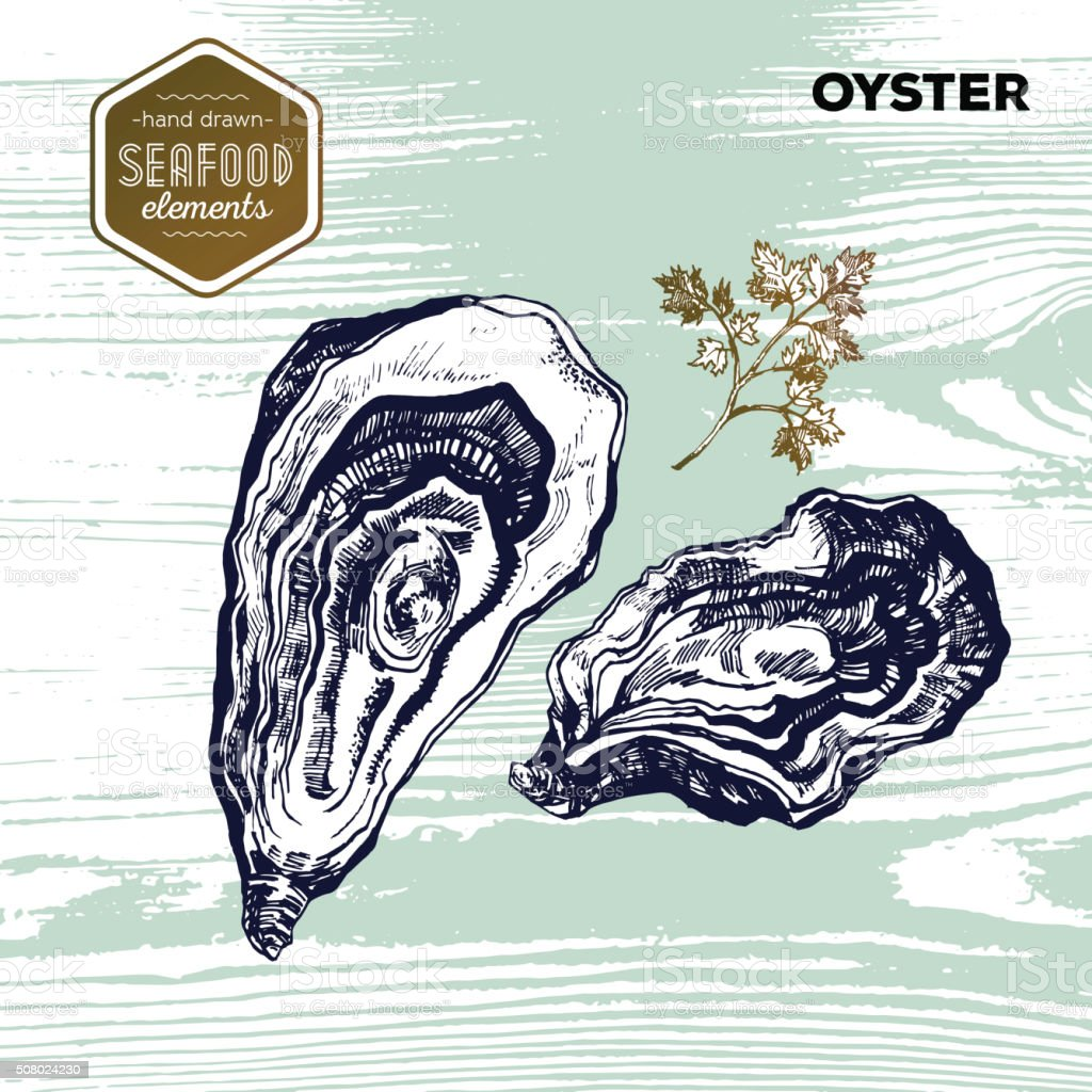Hand drawn sketch seafood of oysters. Vector illustration. Vintage style vector art illustration