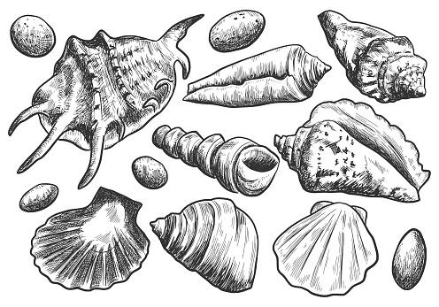 Hand drawn sketch seashells set isolated on white background. Vintage vector engraving illustration.