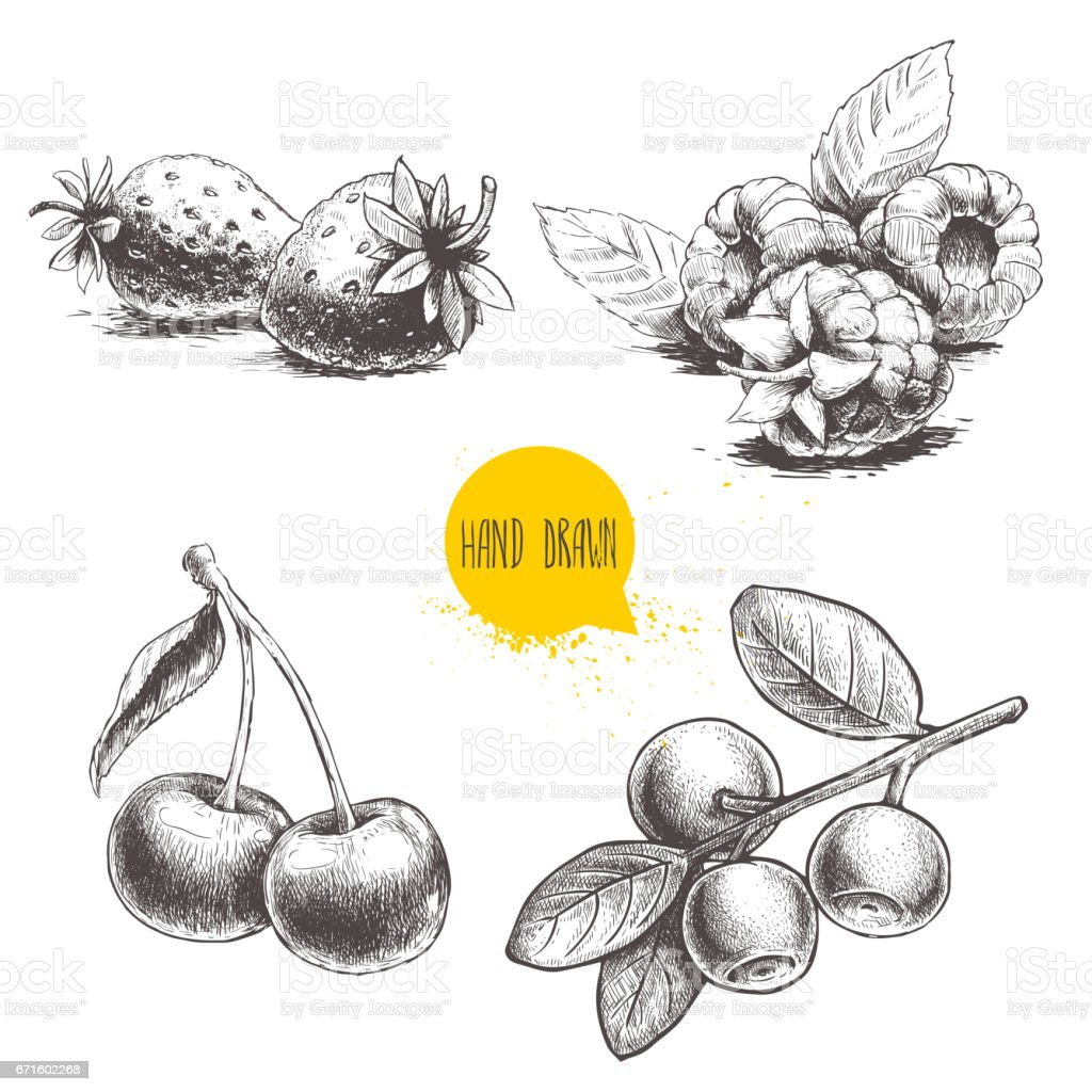 Hand drawn sketch style berries set. Raspberry with leafs, strawberries, cherry and blueberries branch. vector art illustration