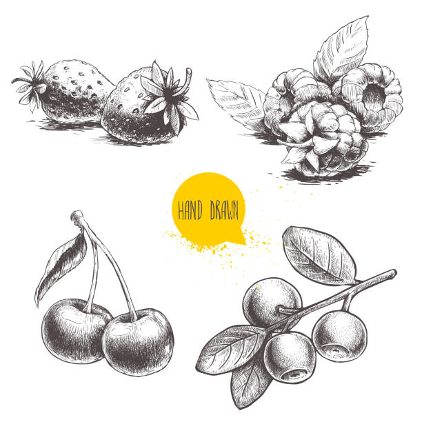 Hand drawn sketch style berries set. Raspberry with leafs, strawberries, cherry and blueberries branch. Hand drawn sketch style berries set. Raspberry with leafs, strawberries, cherry and blueberries branch. Healthy fruit and berry vector retro illustration on white background. EPS10 + JPEG preview cherry stock illustrations