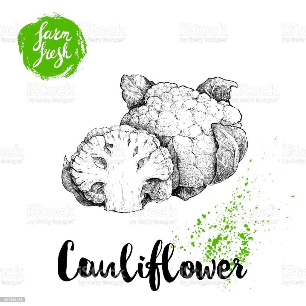Hand drawn sketch style cauliflower composition. Farm fresh food illustration isolated on white background. vector art illustration