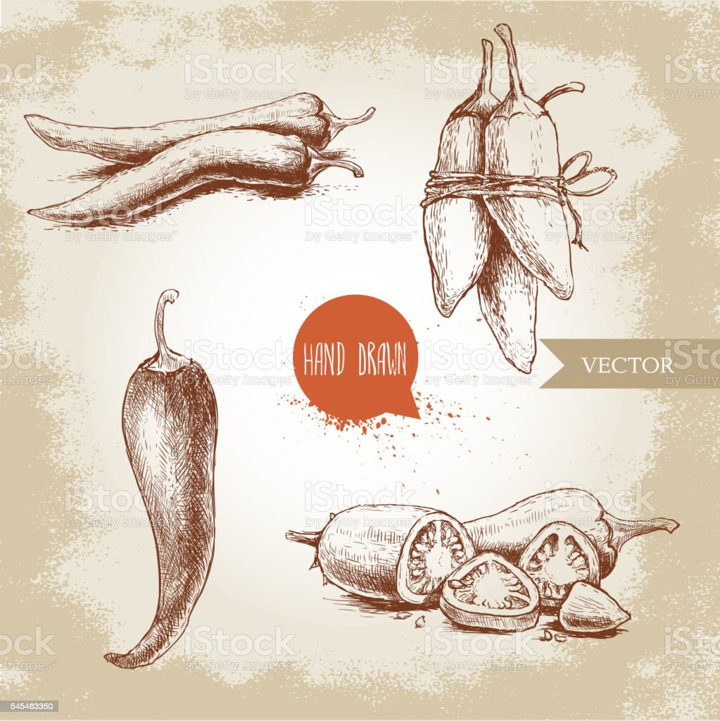 Hand drawn sketch style chili peppers set. vector art illustration