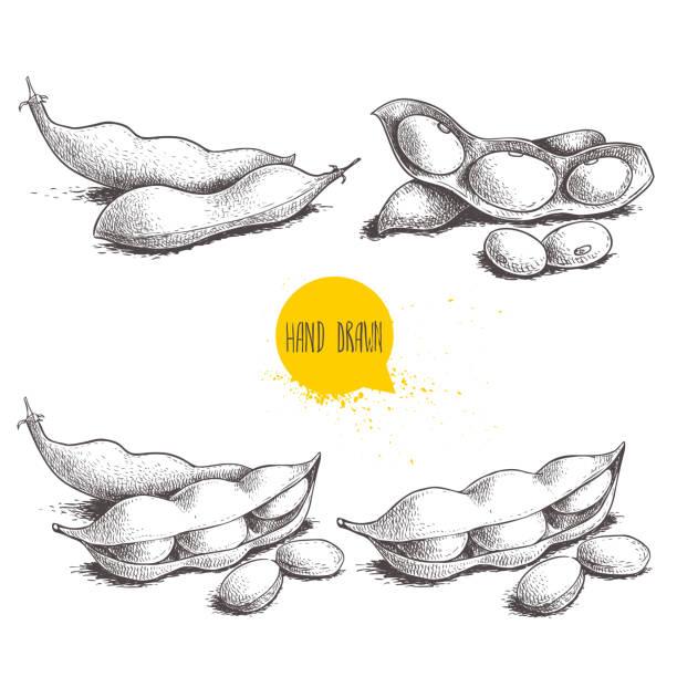 手描きスケッチ スタイル枝豆グリーン豆スケッチ セット。ビーガンとベジタリアン料理。新鮮なファーム市場製品。白い背景に分離されたベクトルのイラスト。 - 枝豆点のイラスト素材/クリップアート素材/マンガ素材/アイコン素材
