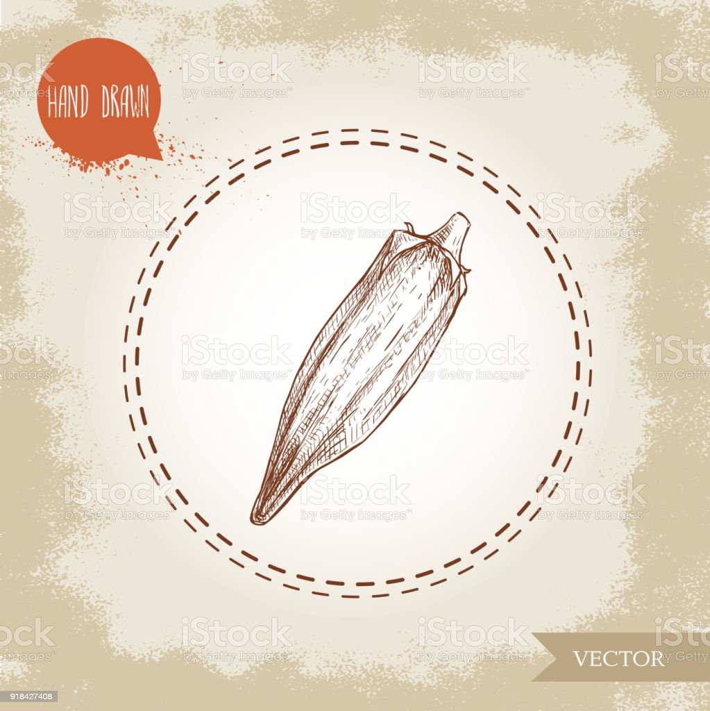 Hand Drawn Sketch Style Exotic Vegetable Okra Vector