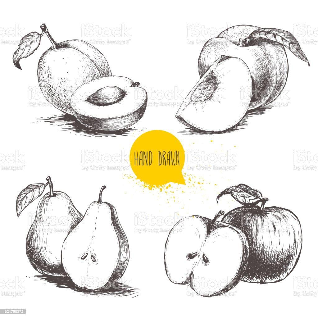 Hand drawn sketch style fruits set. Apricots, peaches, half pears, apples.Bio food vector illustration collection isolated on white background. vector art illustration