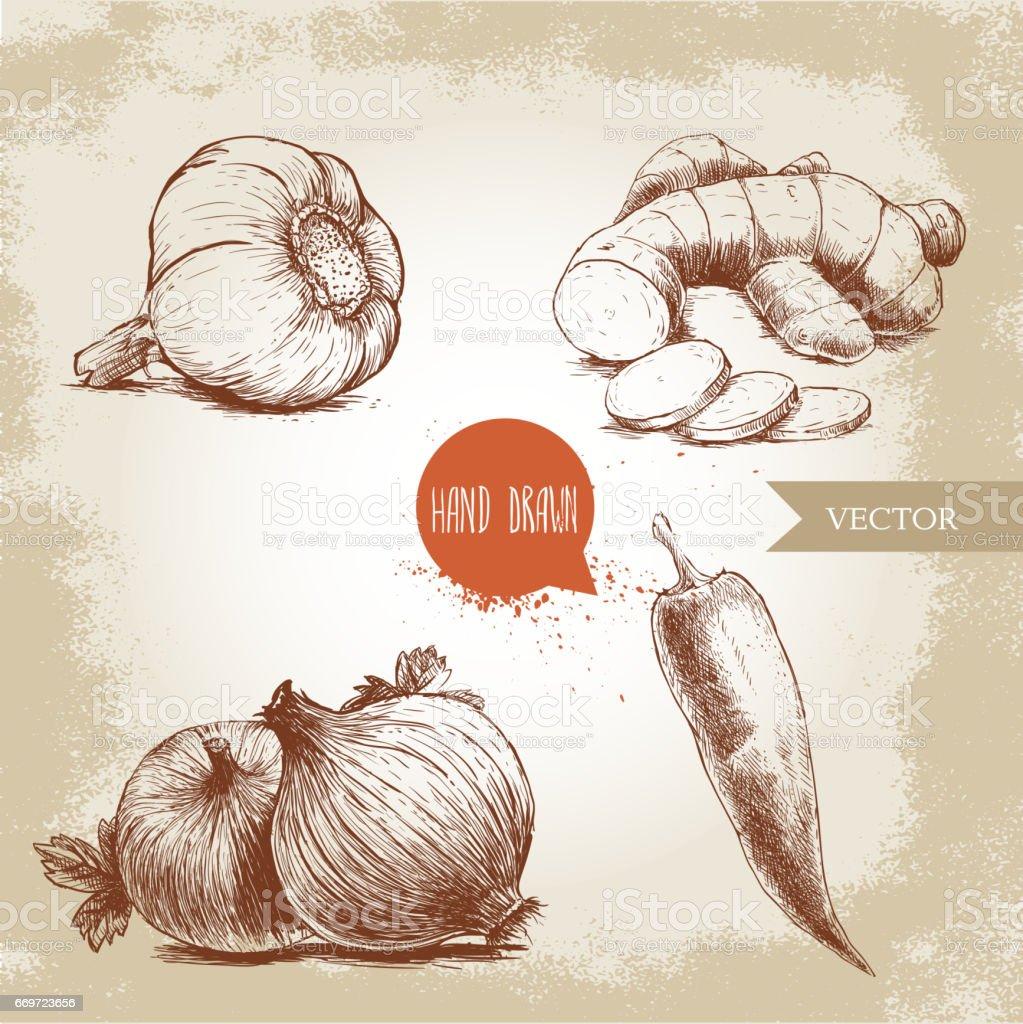 Mão desenhada esboço estilo ilustração de especiarias diferentes. Raiz de alho, gengibre com fatias, cebola e pimenta vermelha quente. - ilustração de arte em vetor