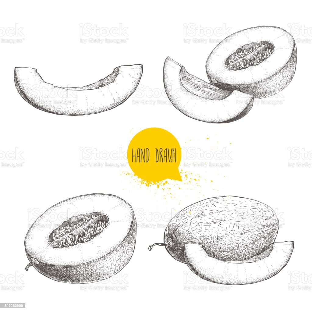 Hand drawn sketch style illustration set of ripe melons and melon slices. Eco food vector illustrations isolated on white background. vector art illustration